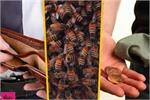 पैसे की बर्बादी लाता है मधुमक्खी का छत्ता, ये चीजें भी मानी जाती हैं...