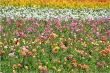 बंद किस्मत के दरवाजे खोलते हैं ये फूल, आपके लिए कौन-सा फूल...