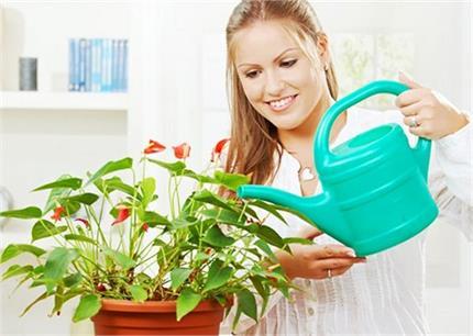 शुद्ध वातावरण के साथ पॉजिटिविटी भी देंगे ये Indoor Plants