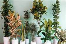 घर में न दें इन पौधों को एंट्री, माने जाते हैं अशुभ
