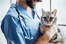 Health Update: बिल्ली की दवा से खत्म होगा कोरोना वायरस!