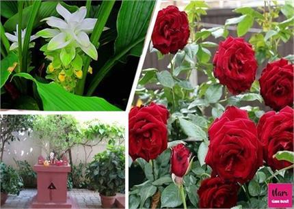 Lucky Plants: खूबसूरती के साथ घर में भाग्य लेकर आते हैं ये पौधे