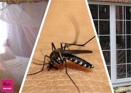 मलेरिया बुखार कर सकता है लिवर डैमेज, जानिए लक्षण व बचाव