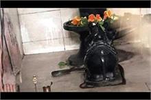 कोरोना के लिए मंदिर में चल रहा था महामृत्युंजय जाप, नाग आया...