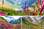 परियों का घर कहा जाता है उत्तराखंड की मशहूर फूलों की घाटी को