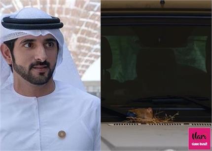 दुबई के क्राउन प्रिंस की दरियादिली, घोंसले को बचाने के लिए छोड़ दी...