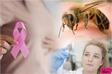 वैज्ञानिकों की बड़ी सफलता, मधुमक्खी के विष से होगा ब्रेस्ट...