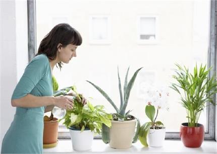 क्यों पानी देने के बाद भी सूख जाते हैं पौधे, कैसे करें इनकी संभाल?