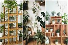 Indoor Plants: बढ़ाए घर की खूबसूरती