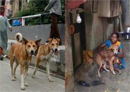 इंसानियत की मिसाल! खुद भूखी रही, ताकि कुत्तों को मिल सके खाना