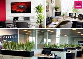 प्लांट से दें ऑफिस को यूनिक लुक, वातावरण भी रहेगा शुद्ध