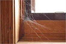 घर में इस मुसीबत के आने का इशारा करते हैं मकड़ी के जाले !