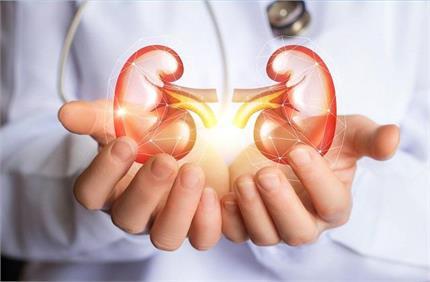 Health Tips: किडनी को हैल्दी रखने के लिए डेली रूटीन में करें ये बदलाव