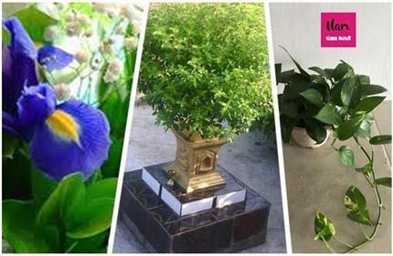 घर पर लगाएं ये Good Luck पौधे, कर्ज व बीमारियों से मिलेगा छुटकारा