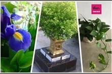घर पर लगाएं ये Good Luck पौधे, कर्ज व बीमारियों से मिलेगा...