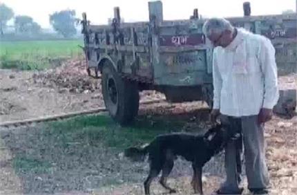 किसान ने बच्चों के नहीं पालतू कुत्ते के नाम कर दी सारी जायदाद, वजह...