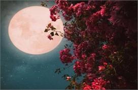 माघ पूर्णिमा: चंद्रोदय के समय करें ये उपाय, रिश्तों में...