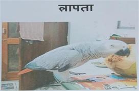 गायब हुआ मिट्ठू तोता तो पुलिस ने दर्ज की गुमशुदगी, 5 हजार...