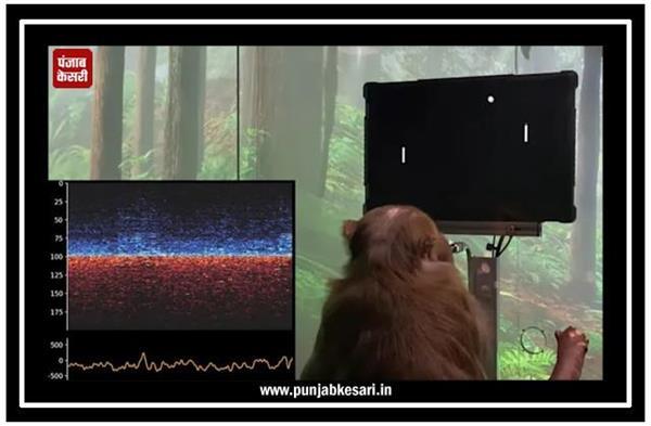 न्यूरालिंक ने जारी किया ब्रेन कंप्यूटर इंटरफेस का डेमो, बंदर को पांग खेलते हुए दिखाया गया