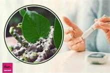 Health Advice: गिलोय से कंट्रोल होगी High Blood Sugar,...