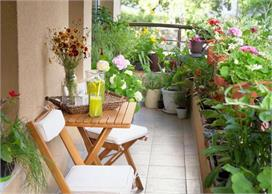 घर में लगे पौधों को कीड़ों से बचने के लिए फाॅलों करे ये...