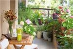 घर में लगे पौधों को कीड़ों से बचने के लिए फाॅलों करे ये Gardening Tips