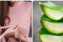 Breast का आकार कम है? इसे बढ़ाने के लिए ऐसे करें एलोवेरा इस्तेमाल