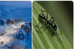 विश्व के सबसे बड़े Island में आपको नहीं मिलेगी एक भी चींटी, जानिए वजह