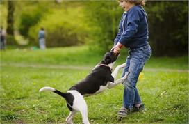 World Rabies Day: कुत्ता काट लें तो तुंरत अपनाएं ये घरेलू...