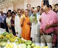 700 species will be exhibited in the mango festival