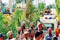 12 farmer arrested