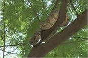 python in the residential area police called to catch the dragon