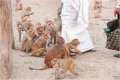 how to deal with the problem of monkeys