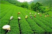 darjeeling tea producers in the us and claims imposed on eastern