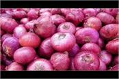 onion prices plunge following oversupply due to release of old stocks