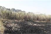 smoke burning of 130 acres of land loss of farmer rs 2 lakh