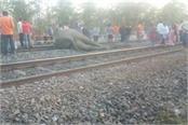 four elephants painful death
