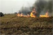 fire in wheat crop