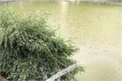fresh water being added to rivalasar lake
