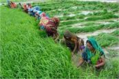 3 26 lakh farmers to get loan waiver letter in may