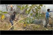 fire in forests of jammu division