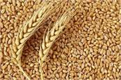 government raises customs duty on wheat