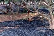 a lot of tree burning ash