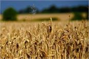 wheat procurement increased by 16 to 30 million tonnes