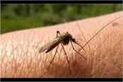 what if a drug could make your blood deadly to mosquitoes