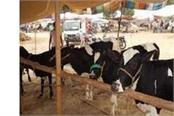formation of veterinary council in haryana