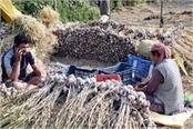 the untimely cost of crops how to double the income of the farmers