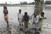water flow in yamuna villagers and saints worshiped and danced