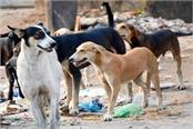 effective steps should be taken to raise the rising dog of the stray dogs