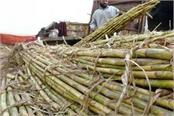 government has increased the price of sugarcane to rs 20 per quintal